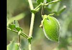 Vitamine K2 MK7, Laboratoire D.Plantes