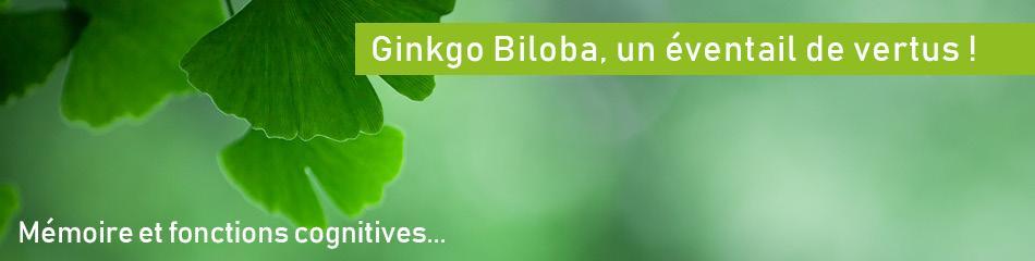 Feuille De Ginkgo Biloba | Bénéfices - Où acheter - Vertus santé