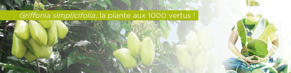 Griffonia Simplicifolia, la plante aux mille vertus, Laboratoire D.Plantes