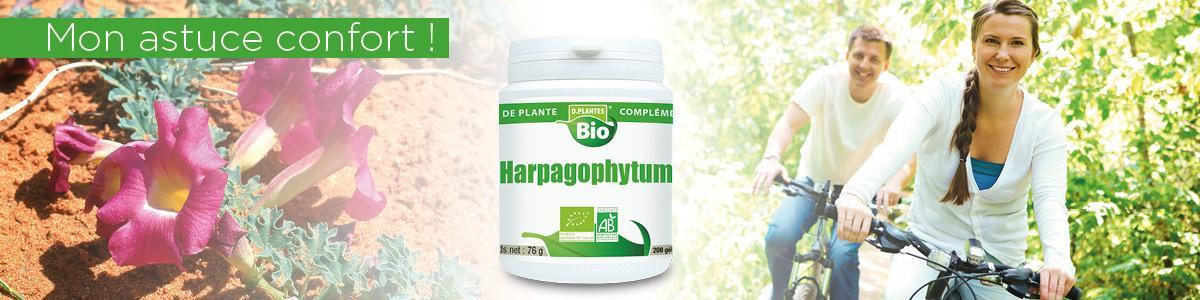L'Harpagophytum, l'allié de vos articulations