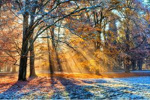 soleil-nature