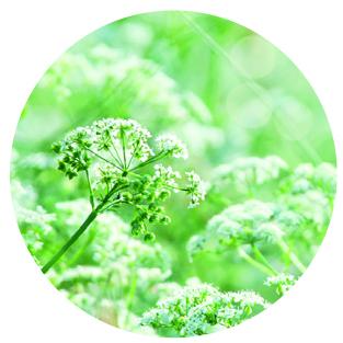 Laboratoire D.Plantes Newsletter